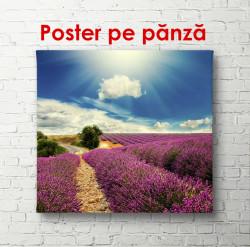 Poster, Câmpul de lavandă