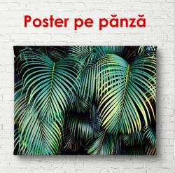 Poster, Frunze de palmier la tropice