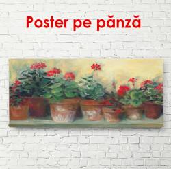 Poster, Ghivece cu flori roșii pe pervaz