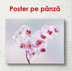 Poster, Orhideea roz pe un fundal albastru