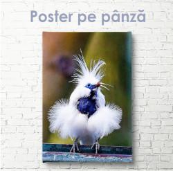 Poster, Pasăre drăguță