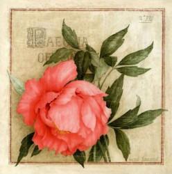 Tablouri Canvas, Bujorul roz pe un fond verde