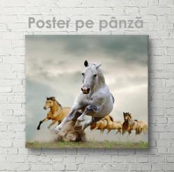Poster, Caii aleargă