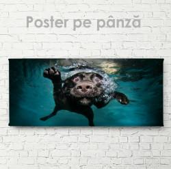 Poster, Câinele sub apă