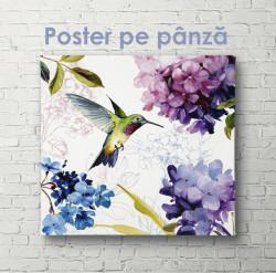 Poster, Colibri printre flori