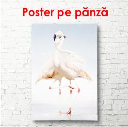 Poster,Două flamingo roz tandre