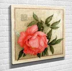 Poster, Trandafirul roz pe fundal verde