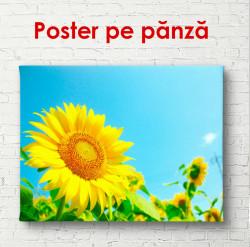 Poster, Câmpul de floarea-soarelui