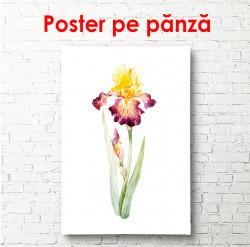 Poster, Floare de iris aprins pictat în acuarelă