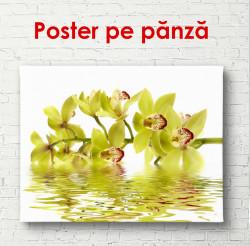 Poster, Orhideea galbenă în reflectarea apei