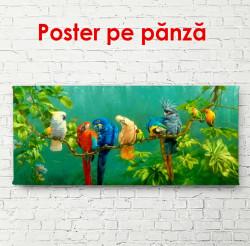 Poster, Papagali multicolor