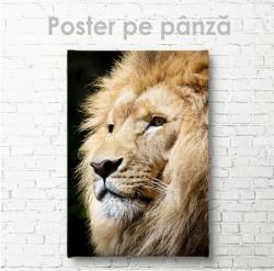 Poster, Regele Leu