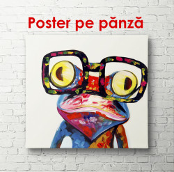 Poster, Broască multicoloră