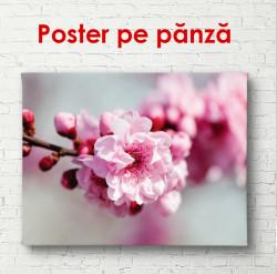 Poster, Florile de primăvară roz