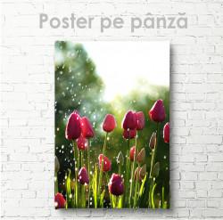 Poster, Lalele
