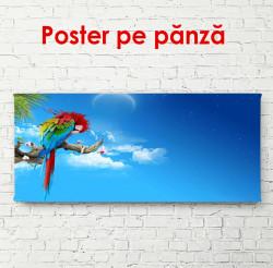 Poster, Papagal pe fundalul cerului