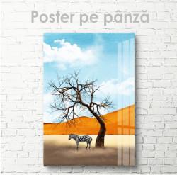 Poster, Zebra în safari