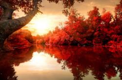 Tablou modular, Toamnă roșie în pădure