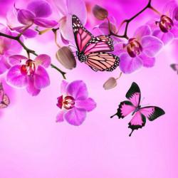 Multicanvas, Orhidee roz cu fluturi