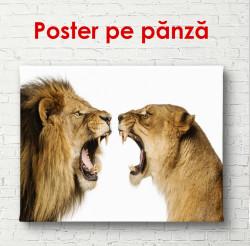 Poster, Animale periculoase pe un fond alb