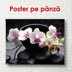 Poster, Orhideea roz delicate pe o piatră neagră