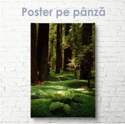Poster, Pădure verde și copaci înalți