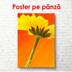 Poster, Floarea galbenă