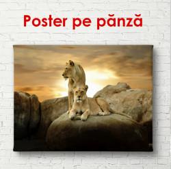 Poster, Leul și leoaica pe o piatră la apusul soarelui