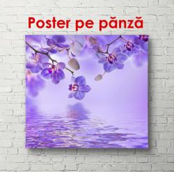 Poster, Orhidee violet cu fluturi pe un fundal violet