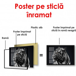 Poster, Tigru alb-negru