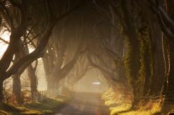Tablou modular, Copacii măreți de-a lungul drumului