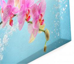 Tablou modular, Orhidee roz pe un fundal albastru deschis.