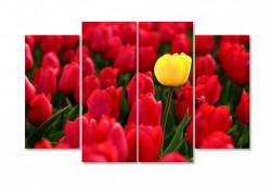 Multicanvas, Lalele galbene și roșii