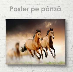 Poster, Doi cai grațioși
