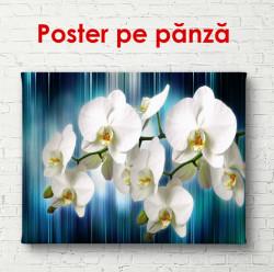 Poster, Orhidee albe pe fundal albastru
