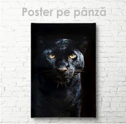 Poster, Puma neagră