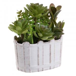 Plante decorative in ghiveci, Charisma, 12Χ8Χ16