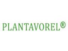PlantaVorel