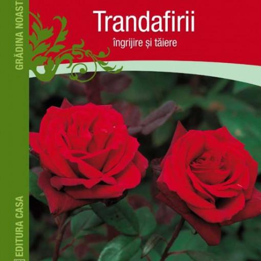 Trandafirii: ingrijire si taiere