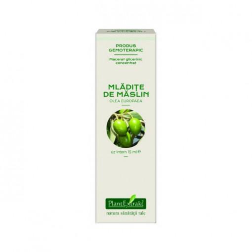 Extract concentrat din mladite de maslin (OLEA EUROPAEA)