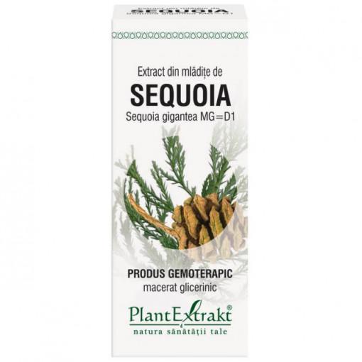 Extract din mladite de sequoia (SEQUOIA GIG.)