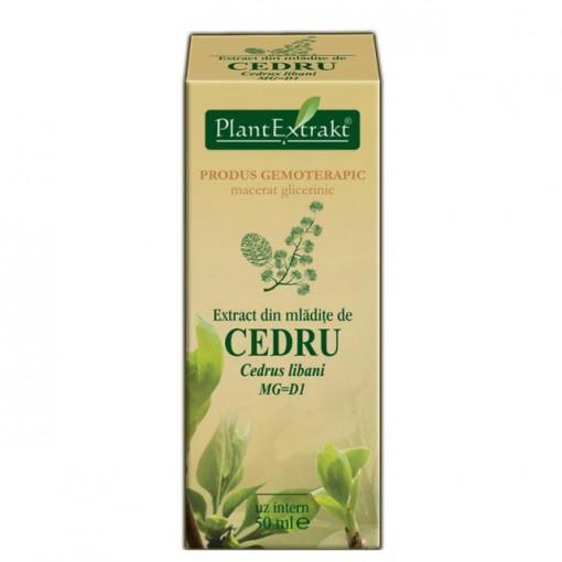 Extract mladite cedru 50 ml (CEDRUS LIBANI)
