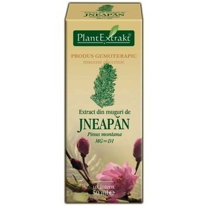 Extract din muguri de jneapan (PINUS MONT.)