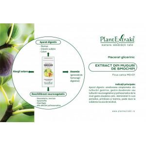 Extract din muguri de smochin (FICUS CARICA)