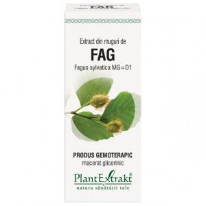 Extract din muguri de fag (FAGUS SYLVATICA)