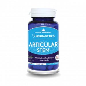 Articular STEM 30 cps