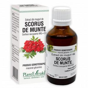Extract din muguri de Scorus de munte 50 ml (SORBUS AUCUPARIA)