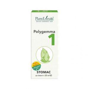 Polygemma nr. 1 - Stomac