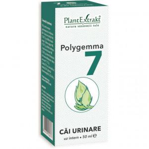 Polygemma nr. 7 - Cai urinare