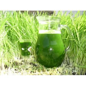 Pulbere (pudra) de Iarba De Grau Verde 250g